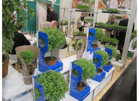 "Sweet Smell of Success Wafts from Israel's ""Basil Tree"""