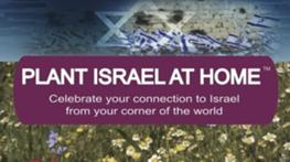 Cultivate Your Israel Connection and Plant Israel At Home™