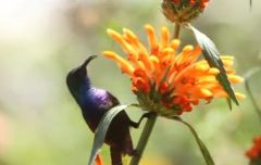 Birds Of Southern Israel - A Sneak Peak