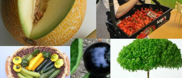 Top 12 New Fruit And Vegetable Species Developed In Israel