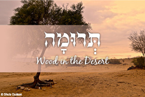 Wood in the Desert: An ancient symbol for an eternal connection